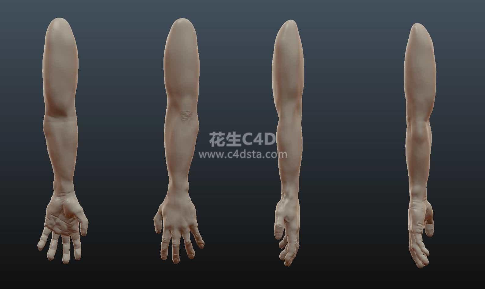 三维模型-高精度写实男性手臂模型 626CG资源站